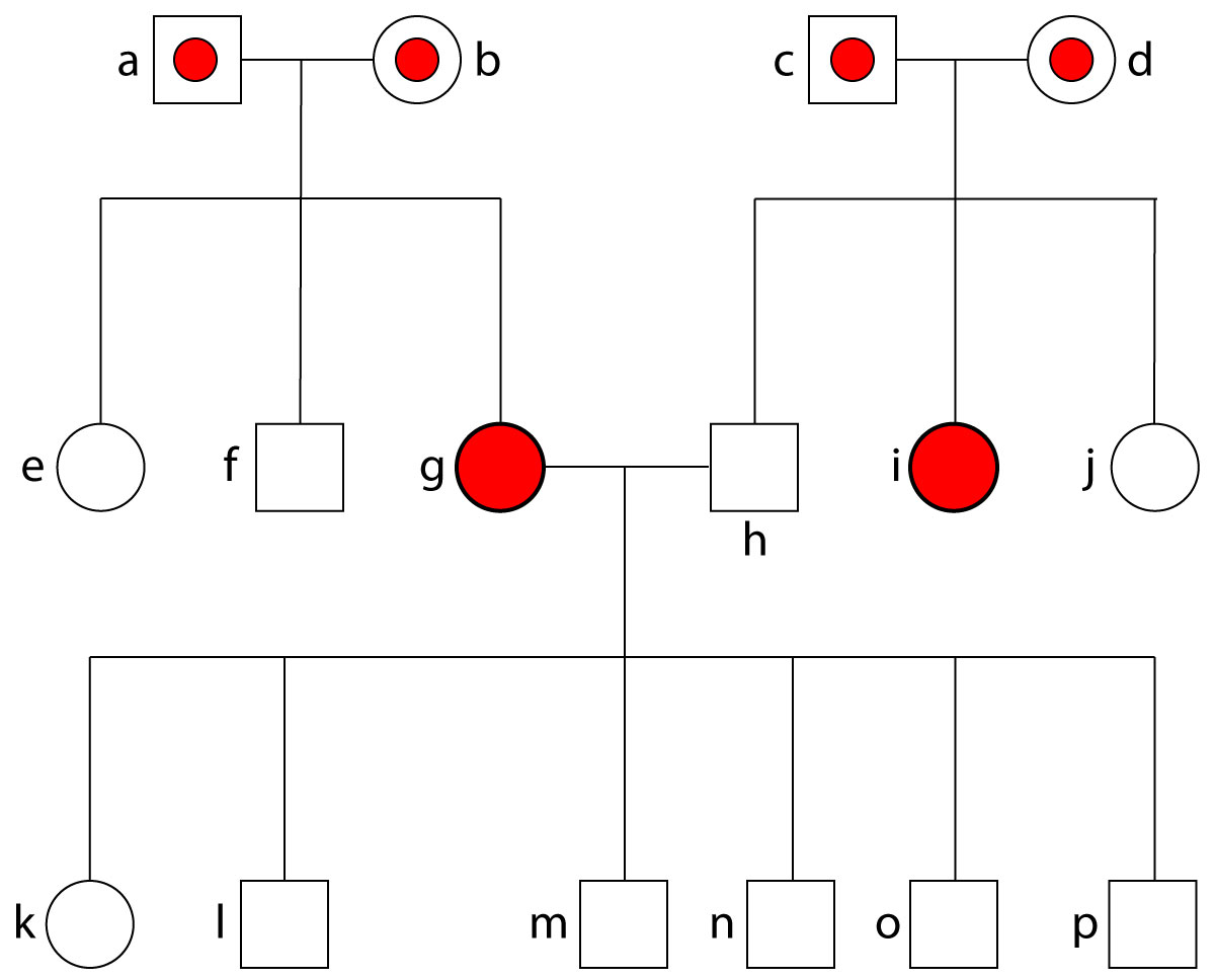 Breadth of Pedigree Figure 1 Symbols Pedigree
